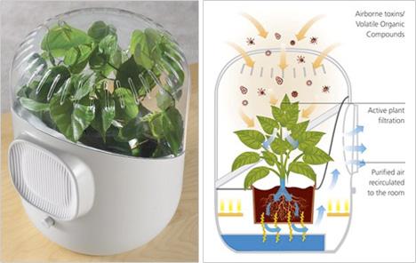 Only Botanical Air Purifier