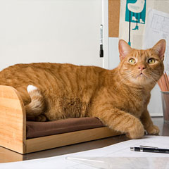 The Refined Feline Kitt-In Box Desktop Cat Bed