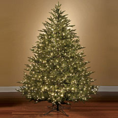 the worlds best prelit fraser fir led