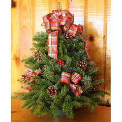 Jeweled Ribbon 18-inch Fresh-Cut Maine Balsam Tabletop Tree